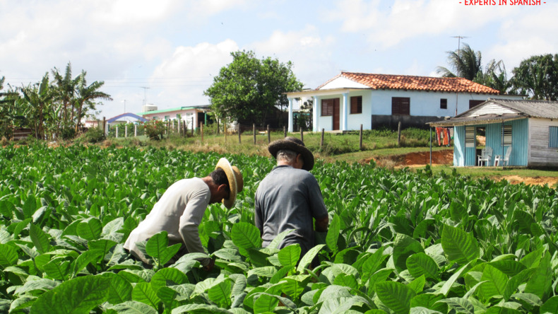 En savoir plus sur La Havane
