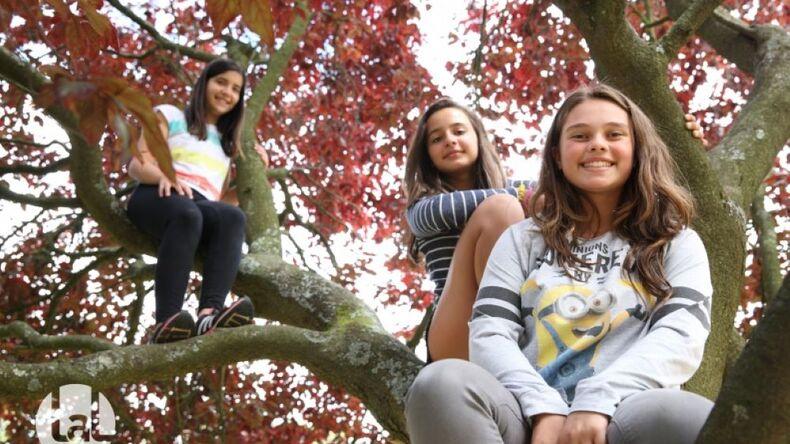 Elever i træet