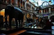 Художня галерея і музей Келвінгроув