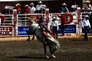 The Calgary Stampede (Rodeo)