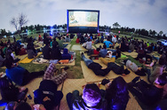 Movie Nights at the River Elbe