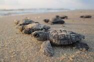 乌龟放生节