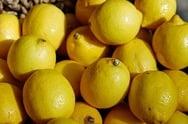 Lemon Festival in Menton