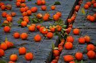 イヴレアの歴史的カーニバル オレンジ投げ合戦(カーネベルディイヴレア/Carnevale di Ivrea)