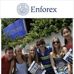 Enforex, Malaga