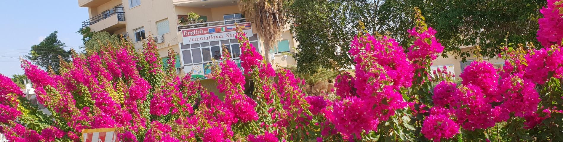 PLATO Educational Services foto 1