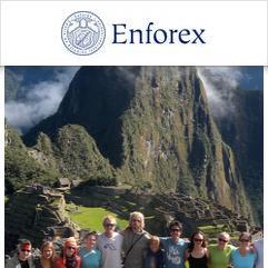 Enforex, Cuzco