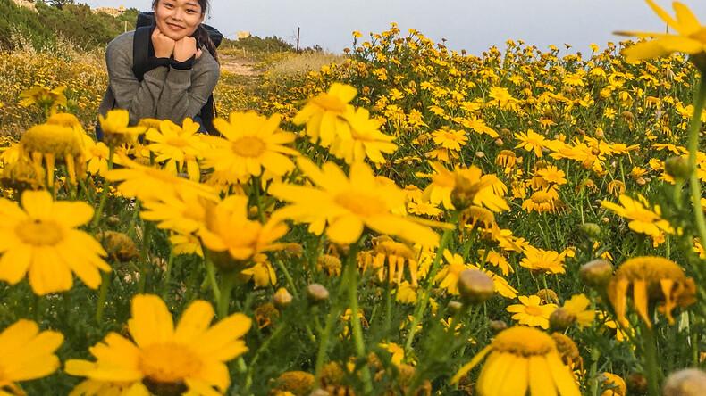 Blomsterfält
