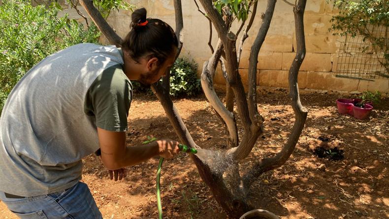 Plantera träd på International House