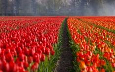 人気目的地: オランダ (都市のサムネイル)