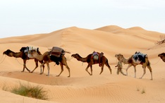 Top Destinations: Tunisia (city thumbnail)