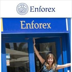 Enforex, Alicante