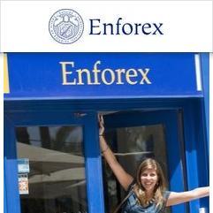 Enforex, 阿利坎特