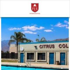 FLS Citrus College, 洛杉矶