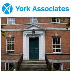 York Associates, 约克